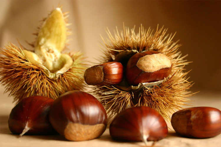 The Chestnut of Cuneo PGI