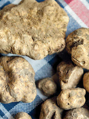 The Truffles of The Umbrian Valtiberina